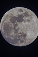 moonshine017