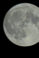 moonshine019
