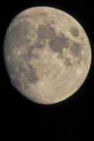 moonshine046