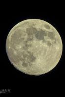 moonshine059